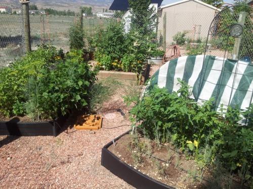the garden 7-9-13